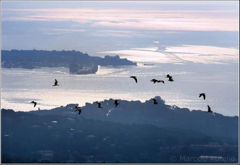 Le peuple migrateur - Tomada desde un helicóptero sobrevolando la Costa Brava hacia Cap de Creus