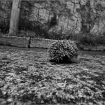El erizo que cruzaba la calle sin mirar - La Floresta - Barcelona
