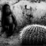 ... - © Marcelo Aurelio
