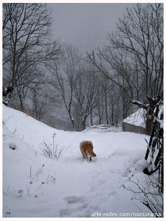 Gos d'Atura Català  - Sobre la nieve