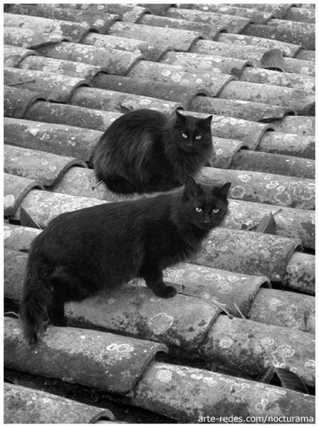 Sister - por los tejados