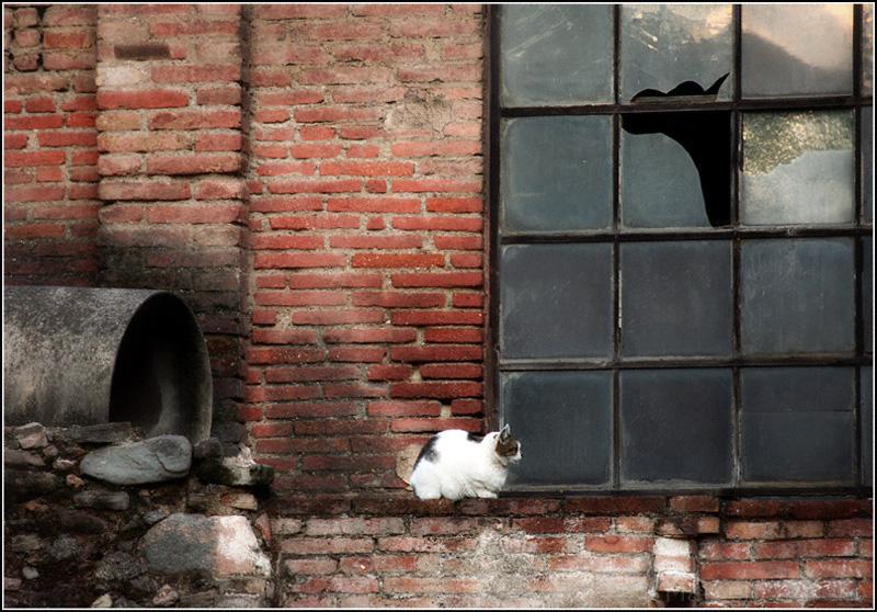 Perro y gato - Terrassa -  Barcelona