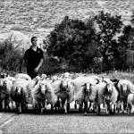 El pastor - Cerdeña