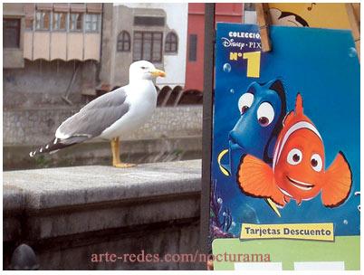 Buscando a Nemo. Girona.