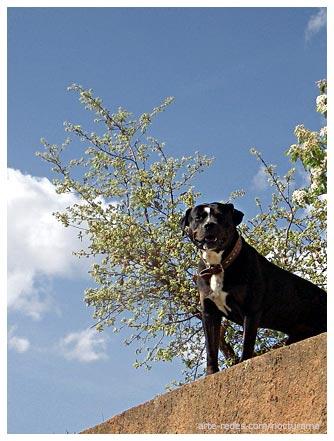 Blues del perro - Pappo - perro de La Floresta, Barcelona