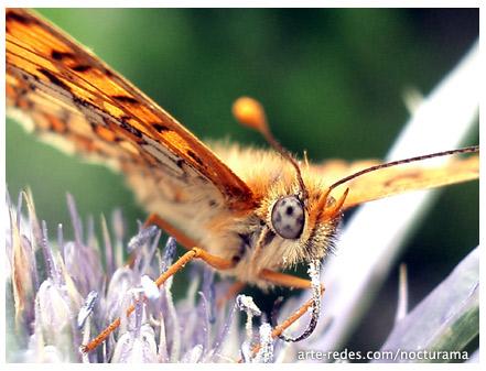 Otras miradas - Mariposa en la montaña -