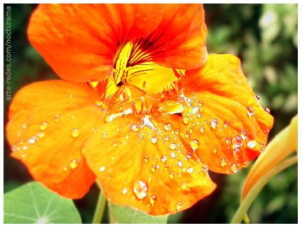 Photo Friday - This week's challenge:  Orange  -  en el jardín de Magali