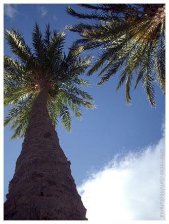 Sobre las palmeras - Premià de Mar, Barcelona